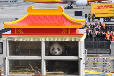 DHL (DHL Air) 767-300F G-DHLG (02-Pandastic Journey)(Panda) BRU (KCN)(LRW)