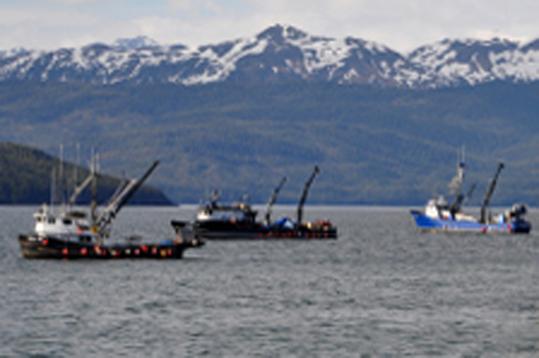 Salmon fishing fleet in Cordova, Alaska (Alaska)(LR)